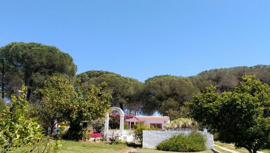 1053: Finca for sale in Lucena del Puerto