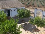 1077: Villa for sale in Gibraleon