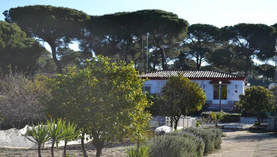 Bonares Finca For sale 139000 €